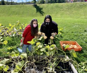 Students harvesting gourds